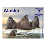 Walrus - Four Brothers Post Card
