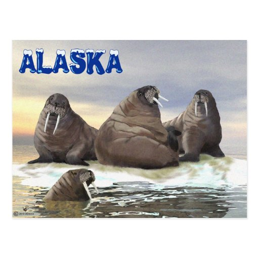 Walrus - Four Brothers Post Cards