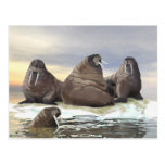 Walrus - Four Brothers Postcard