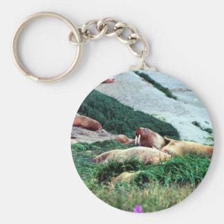 Walrus Keychains