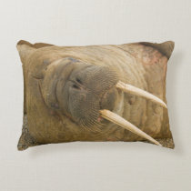 Walrus large bull resting on a beach accent pillow