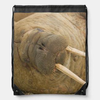Walrus large bull resting on a beach drawstring bag
