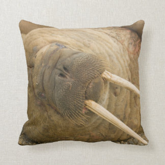 Walrus large bull resting on a beach throw pillow