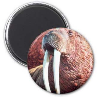 Walrus Fridge Magnet