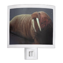 Walrus Night Light