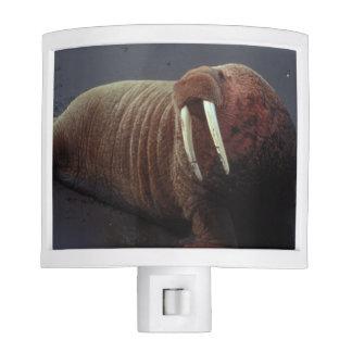 Walrus Night Light