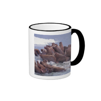 walrus, Odobenus rosmarus, on the pack ice of Ringer Coffee Mug