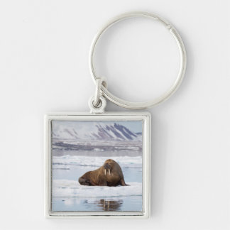Walrus on a Piece of Ice Flow Keychain