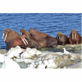 Walrus on Bering Sea Ice Statuette