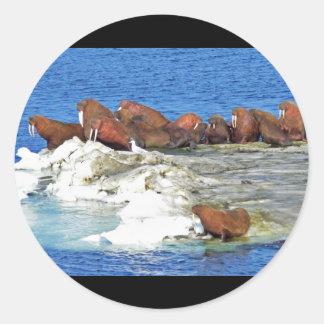 Walrus on Bering Sea Ice Round Sticker