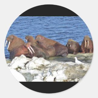 Walrus on Bering Sea Ice Stickers