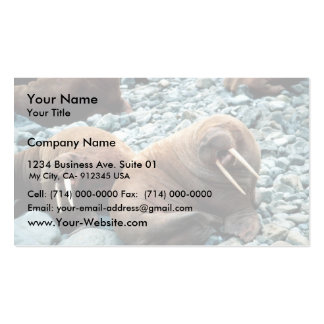 Walrus Pair Business Cards