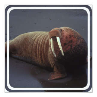 Walrus Photo Invitation