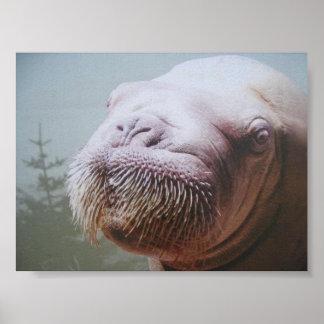 Walrus Photo Poster