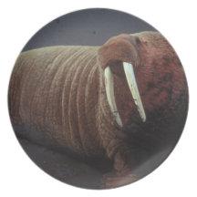 sc 1 st  Zazzle & Walrus Tusks Plates | Zazzle