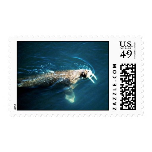 Walrus Postage Stamp