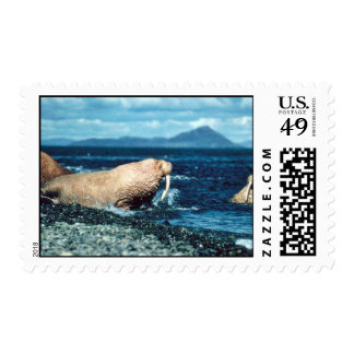 Walrus Postage Stamps