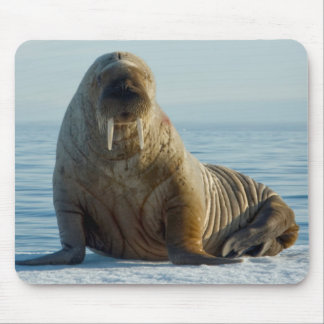 Walrus rests on summer sea ice mouse pad