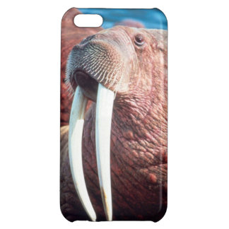 Walrus - Savvy iPhone 5 Cover