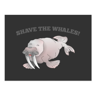 Walrus SHAVE THE WHALES Postcard