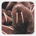 Walrus Square Stickers