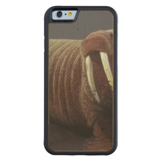 Walrus Carved® Maple iPhone 6 Bumper