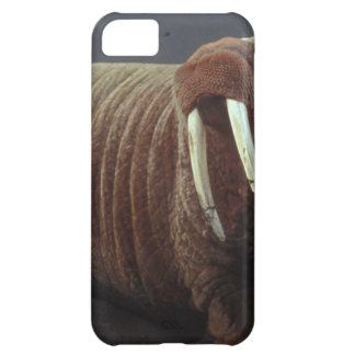 Walruses Cover For iPhone 5C