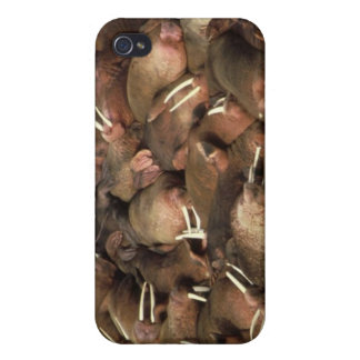 Walruses iPhone 4 Case