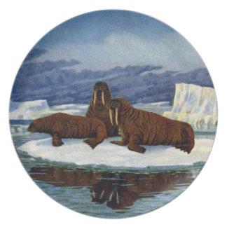 Walruses on an Ice Floe Plates