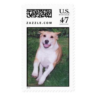 Walter3 Stamp