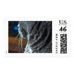 Wandas Whiskas Stamp