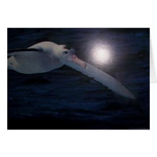 Wandering Albatross card