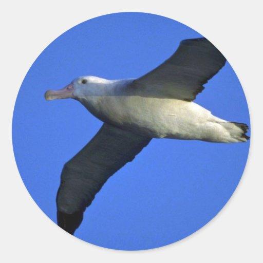 Wandering Albatross In Flight Round Stickers