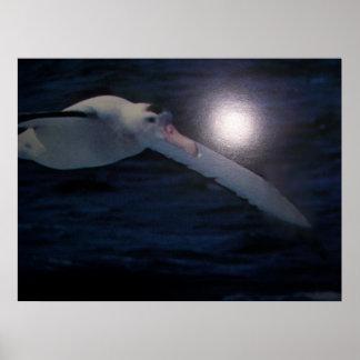 Wandering Albatross Poster