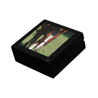 Wandering American Quarter Horse Gift Boxes