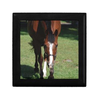 Wandering American Quarter Horse Keepsake Box