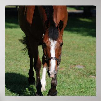 Wandering American Quarter Horse Poster