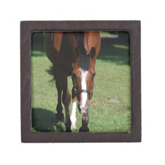 Wandering American Quarter Horse Premium Keepsake Boxes