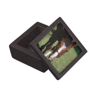 Wandering American Quarter Horse Premium Keepsake Box