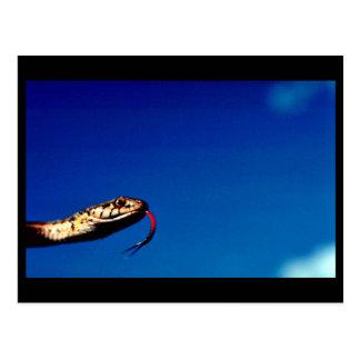Wandering Garter Snake Postcard