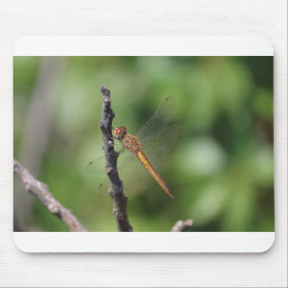Wandering Glider Mouse Pad