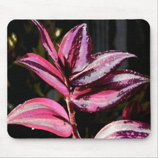 Wandering Jew Mouse Pad