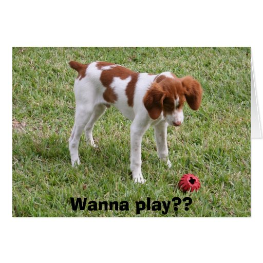 Wanna play?? greeting cards