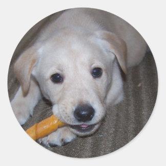 want a chew? Sticker