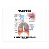 Wanted A Breath Of Fresh Air (Respiratory System) Postcard