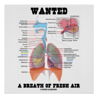 Wanted A Breath Of Fresh Air (Respiratory System) Poster