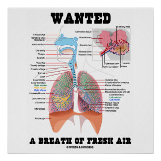 Wanted A Breath Of Fresh Air Respiratory System Posters