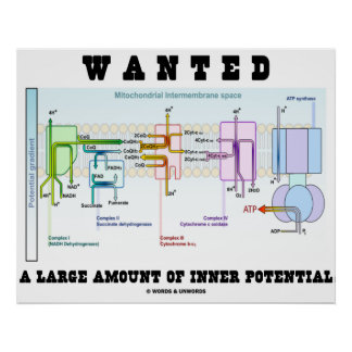 Wanted A Large Amount Of Inner Potential Poster