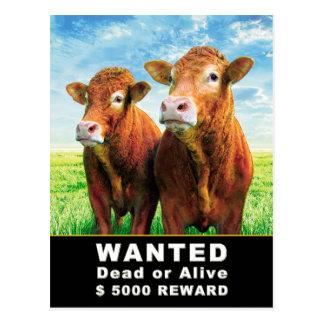 WANTED Dead or Alive $ 5000 REWARD Postcard