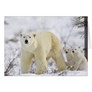 Wapusk National Park, Canada. Greeting Card